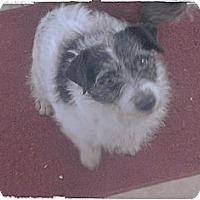 Adopt A Pet :: Aria - Hartsville, TN