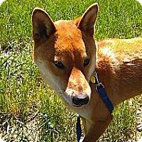 Adopt A Pet :: Kichiro - Centennial, CO