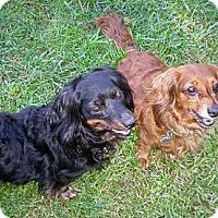 Adopt A Pet :: Isabelle - San Jose, CA