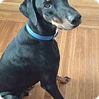 Adopt A Pet :: George - New Richmond, OH