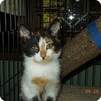 Adopt A Pet :: Pachuli - CARVER, MA