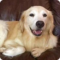 Adopt A Pet :: Rita - Scottsdale, AZ