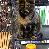 Adopt A Pet :: Baton - Caistor Centre, ON