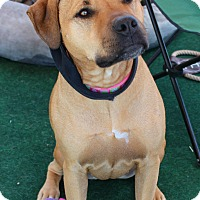Adopt A Pet :: Reese - Yuba City, CA