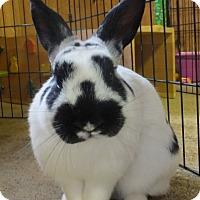 Adopt A Pet :: Thje Shenanigator - Foster, RI