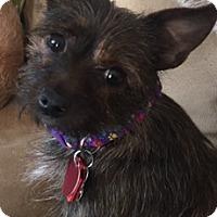 Adopt A Pet :: Maddie - Beavercreek, OH