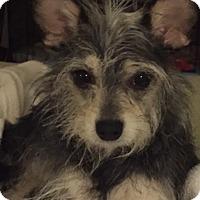 Adopt A Pet :: Dottie - Tempe, AZ