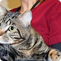 Adopt A Pet :: Brave l'il Toaster - Wildomar, CA