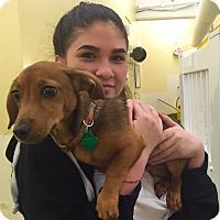 Adopt A Pet :: Benji - San Francisco, CA