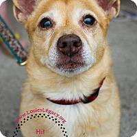Adopt A Pet :: Peechy - Staten Island, NY