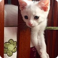 Adopt A Pet :: Duke - Homewood, AL
