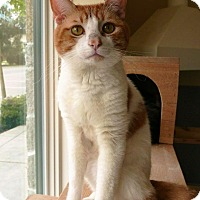 Adopt A Pet :: Amos - Kingston, WA