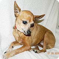 Adopt A Pet :: Missy - Umatilla, FL