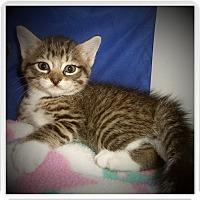 Adopt A Pet :: JINX - Medford, WI