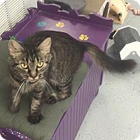 Adopt A Pet :: Olympia - San Leon, TX