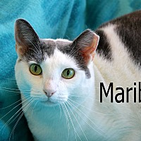 Adopt A Pet :: Maribel - Wichita Falls, TX