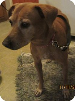 Australian Cattle Dog/Beagle Mix Dog for adoption in Von Ormy, Texas - Tracy