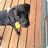 Adopt A Pet :: Nigel - Wymore, NE