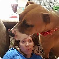 Adopt A Pet :: Raegan - Pataskala, OH