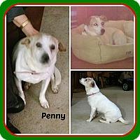 Adopt A Pet :: PENNY - Malvern, AR