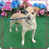 Adopt A Pet :: CINDERELLA - Marietta, GA