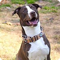 Adopt A Pet :: Heath - Arden, NC
