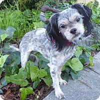 Adopt A Pet :: Samantha BB - Seattle, WA