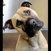 Adopt A Pet :: Calamity - Homer, NY