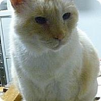 Adopt A Pet :: Cream - Hamburg, NY
