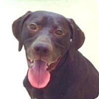 Adopt A Pet :: Wiley - Palm City, FL