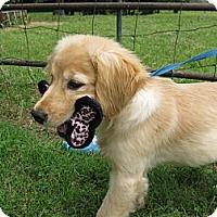 Adopt A Pet :: Yoda - Humboldt, TN