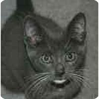 Adopt A Pet :: Luigi - Arlington, VA