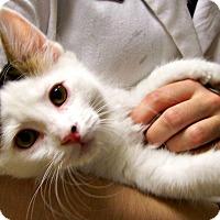 Adopt A Pet :: Kal-El - Toledo, OH