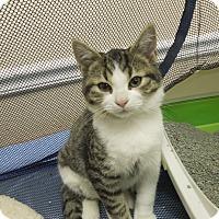 Adopt A Pet :: Soda - Medina, OH