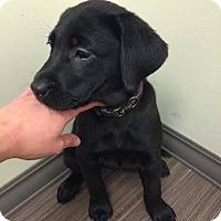 Adopt A Pet :: Minnie - Cumming, GA