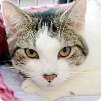 Adopt A Pet :: Tigger - Oviedo, FL