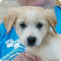 Adopt A Pet :: Powder - Weatherford, TX