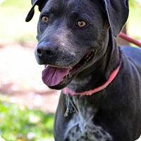 Adopt A Pet :: Janey - Everett, WA
