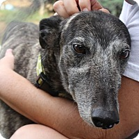 Adopt A Pet :: Clover - Tucson, AZ