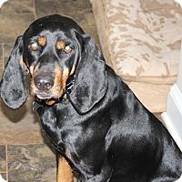 Adopt A Pet :: Visions of Johanna - Atlanta, GA