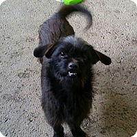 Adopt A Pet :: CASEY - Gustine, CA