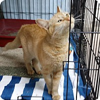 Adopt A Pet :: Ginger - Port Clinton, OH