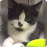 Adopt A Pet :: MISS HARPER LEE - Cliffside Park, NJ