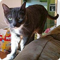Adopt A Pet :: Juju - Simi Valley, CA