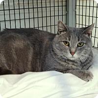Adopt A Pet :: Lexi - Victor, NY