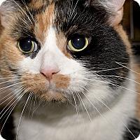 Adopt A Pet :: Lash - Medina, OH