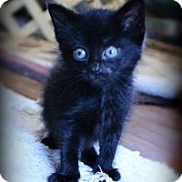 Adopt A Pet :: Cocoa - Wilmington, NC