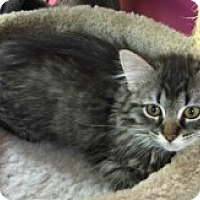 Adopt A Pet :: Valory - McHenry, IL