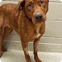 Adopt A Pet :: Elly - Shorewood, IL
