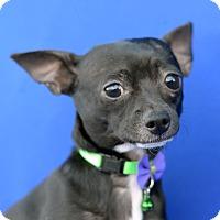 Adopt A Pet :: KILO - LAFAYETTE, LA